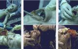 Marcos de espectáculo, en el sitio web de XFX.  Todo el mérito de reunir y archivar estas imágenes, así como de la información pertenece a мексиканскому investigador luis Руису Ногуесу (Luis Ruiz Noguez) y kentaro mori (Kentaro Mori). Traducido del servicio de «Yandex.Traductor»