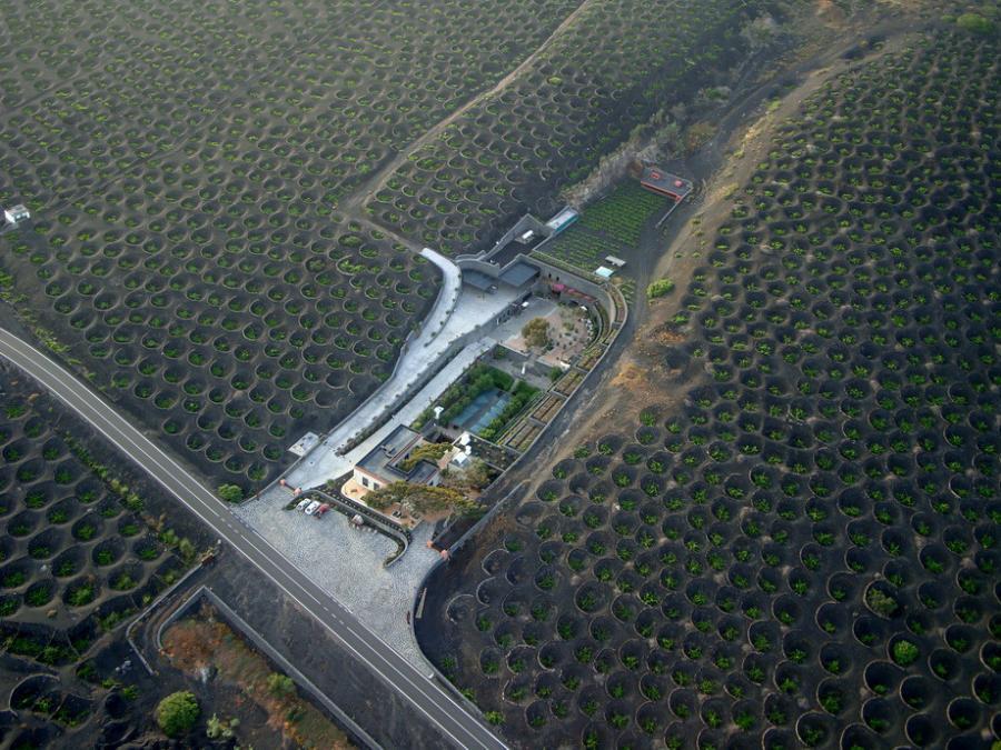 Вулканические виноградники острова Лансароте.  Основная часть виноградников Лансароте расположена в долине La Geria, которая на значительном своем протяжении покрыта толстым слоем пепла. Виноградные саженцы высаживают в специально вырытые ямы или траншеи до нескольких метров шириной.Виноградные ямы, как правило, окружают специальной оградой из базальта, для защиты от иссушающих ветров.
