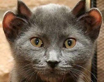 Четырехухий кот Лунтик.
