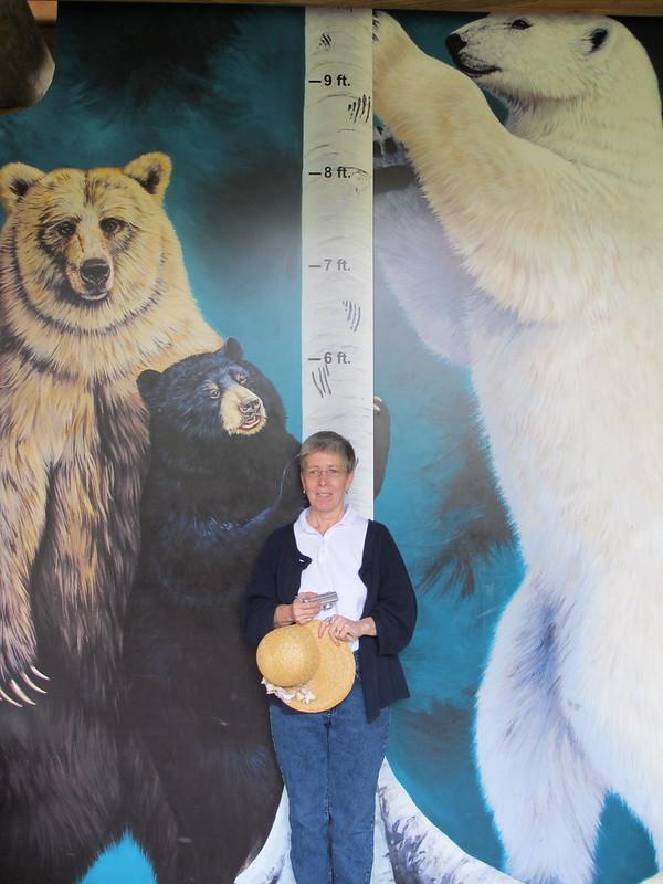 Сравнительные размеры медведей разных видов и человека.