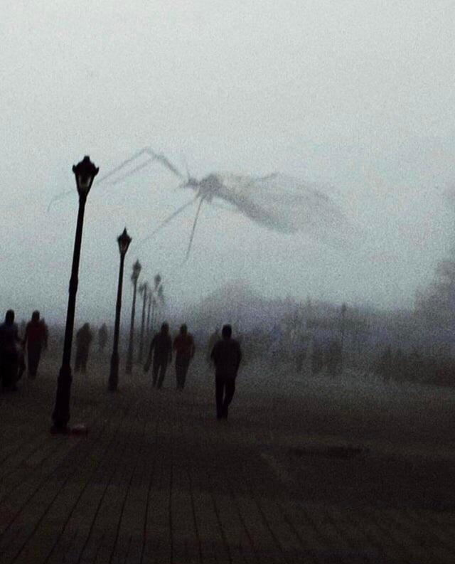 Комар пролетел перед линзой фотоаппарата  Автор: u/ThePhantom1994