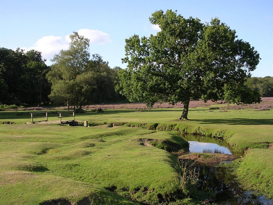 New Forest (eng.New Forest) — a national park inGreat Britain.